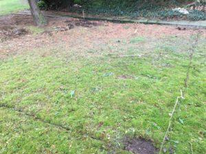 Golfgrün im eigenen Garten anlegen